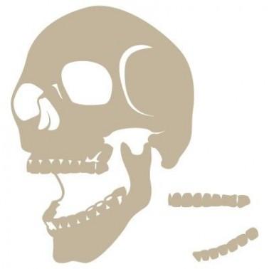 Stencil Aerografia Calavera 002 Medio Perfil